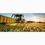 Закупаем пшеницу любого качества