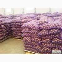 Оптовая продажа картофеля от ТОВ Компании УкрТор