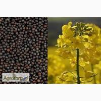 Пропонуємо насіння ріпаку, стійкого до раундапу – Клеопатра