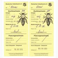 Бджоломатки F1 Бакфаст ПЛІДНІ (замовлення на 2019), Тростянец