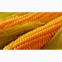 Купим кукурузу в Черниговской области
