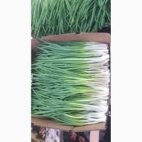 Зелена цибуля (перо)