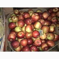 Продам домашні Яблука