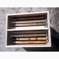 Пчелосемьи пчелопакеты