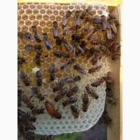 Продам матки та бджолопакети БАКФАСТ