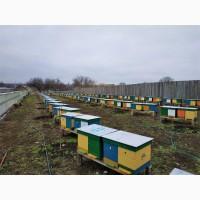 Продам пчёлопакеты, семьи, улья