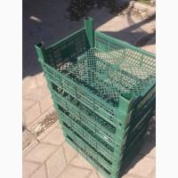 Ящик пластиковый для клубники