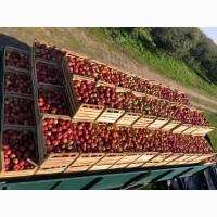 Продам яблуко Айдарет