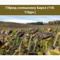 БАРСА - насіння соняшника гібрид 110-116дн