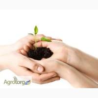 Семена подсолнечника кукурузы под урожай