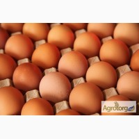 Продам яйцо куриное коричневое С-0 от производителя ПП СВТФ ІЗА