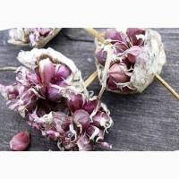 Продам семена(воздушка) чеснока Любаша