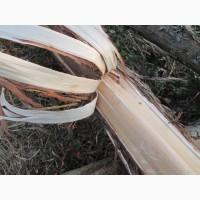 Можжевельник кора 2017 эко натур Juniperus communis