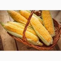 Купим кукурузу в Сумской области