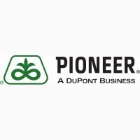 Cемена подсолнечника Пионер