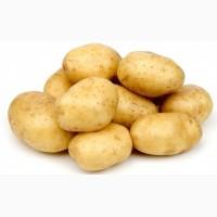Картофель, ривьера продадим оптом