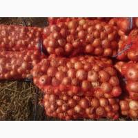 Продаём лук оптом от производителя сорт Халцедон
