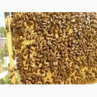 Продам пчелопакеты пакеты