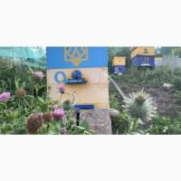 Продам натуральный мед оптом из разнотравья и подсолнуха