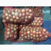 Продам лук в хорошем качестве без болезни товарный вид
