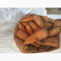 Продам морковь, хорошего качества.Сорт Абако, боливар, каскад.Нал.безн.расчёт