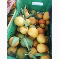 Продажа тоннами мандарин 3 качества