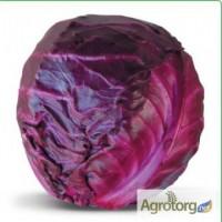Семена краснокочанной капусты KIOTO F1 / КИОТО F1 фирмы Китано
