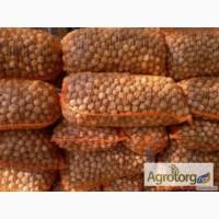 Куплю (сухий) чищиний грецький, волоський, ліщиновий горіх
