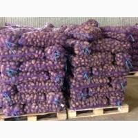 Продаж картоплі опт і роздріб
