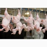 Предлагаем Мясо Птицы и Рыбу