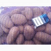 Продам картофель оптом сорт гренада
