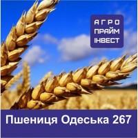 Пшениця Одеська 267