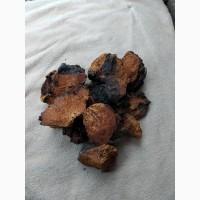 Продам (гриб) Чагу березову суху (ціна за кілограм)