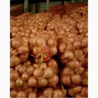 Продам лук сорт Глобус