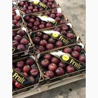 Оптовые поставки фруктов из испании