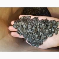 Семена гибрид подсолнечника LEBRON
