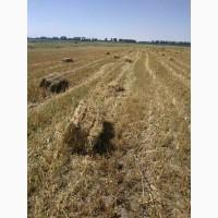Продам солому урожая 2020