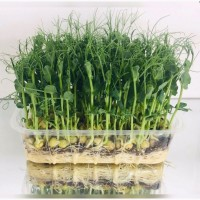 Виробництво мікрозелені різних культур. Опт / роздріб