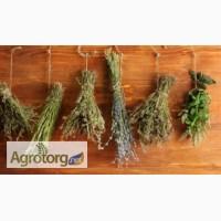 Лікарські трави, корінці (роздріб та опт)