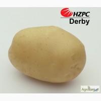 Насіннєва картопля Дербі