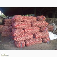 Продаю Картофель оптом 5+ от производителя 5 грн. 1 кг. Запорожье