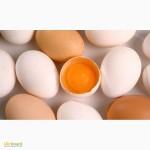 Яйце фермерське харчове