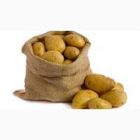 Продажа картофеля крупным оптом