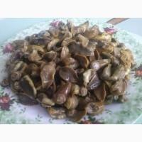Мясо виноградной улитки (нога) глубокой заморозки. В брикетах 0, 5 - 1 кг