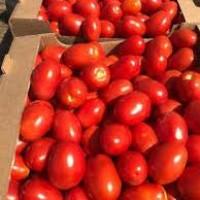 Продам помидоры с поля