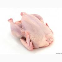 Продам Курица / Куряча продукція
