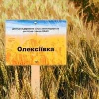 Олексіївка- Алексеевка пшеница озимая продовольственного направления