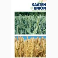 Озима Пшениця ГЮСТАВ (І Репродукція)