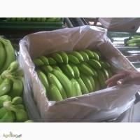 Бананы из Эквадора оптом
