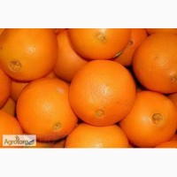 Апельсин з Єгипту оптом